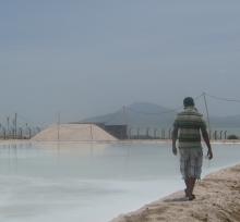 Regulatory monitoring support to Ethiopia's salt iodization program
